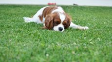 6 Ways Your Yard Can Kill Your Pets