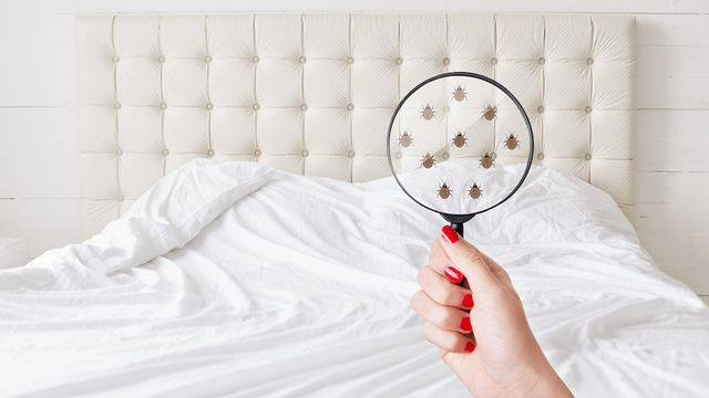 Bedbugs Could Be a Big Deal as Travel Restrictions Ease—Here's Why