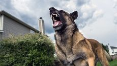 How to Stop a Dog From Barking (and Driving You Bonkers)