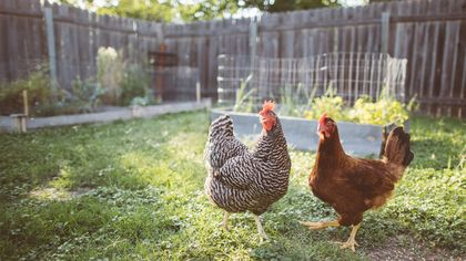 Have a Pet Chicken, Llama, or Tarantula? Exotic-Pet Sitters Have You Covered