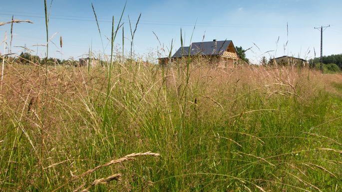 FL-man-tall-grass