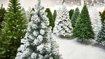 Real vs. Artificial Christmas Tree: Which Is More Eco-Friendly?
