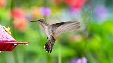 How To Create a Hummingbird Hangout in Your Garden