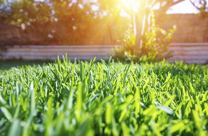 Fresh green backyard