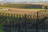 Raise Your Glass: Tenuta Vineyards in Livermore Up for Sale for $9.6M