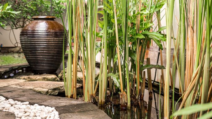6 Plants And Shrubs That Ll Wreck Your Yard Ruin Life