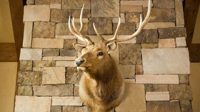 deer-head-mounted