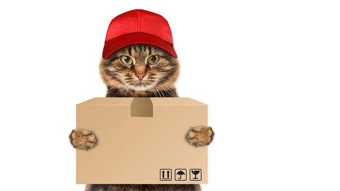 Unless your pet can move some boxes, keep them out of the movers' way.