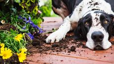 Pet-Friendly Flowers and Herbs To Safely Grow in Your Garden (and What To Avoid)