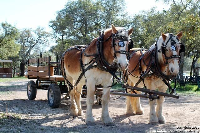 Belgian plow horses