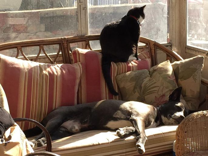 Levon the dog and Lemmy the cat enjoying their Brooklyn home