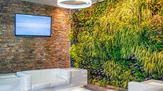 Green Up! Here's How to Grow a Vertical Garden