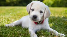 Most Popular Dog Names of 2017 (Roll Over, Fido)