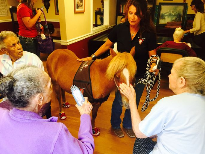 A therapy horse brings comfort and joy to seniors in Phoenix.