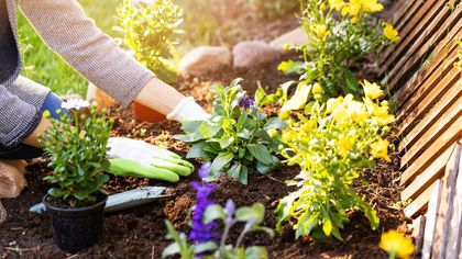 What Kind of Green Thumb Are You? Your Garden Personality, Explained