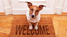 How Pets Can Help You Sell Your Home