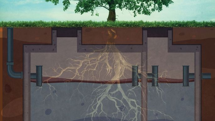 Tree-going-into-septic-Tank