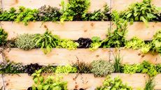 7 Gorgeous Gardening Trends to Try This Summer