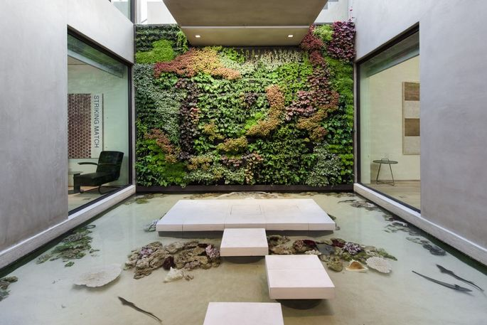 Open air shark tank and living wall