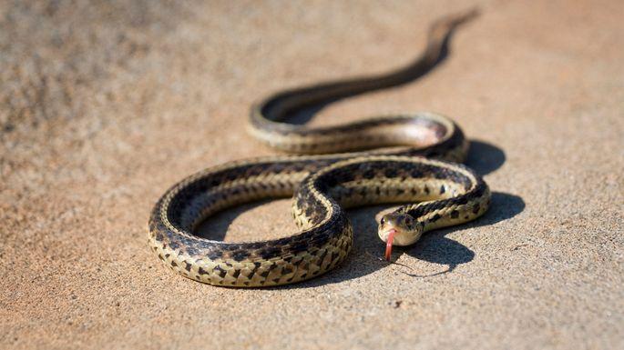 surprise-house-snake
