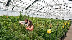 Will Legal Marijuana Give Home Prices a New High?