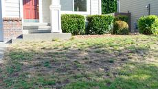 How to Restore a Lawn Plagued by Weeds or Brown Patches