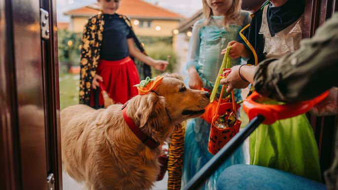 Your pets should skip trick-or-treating.