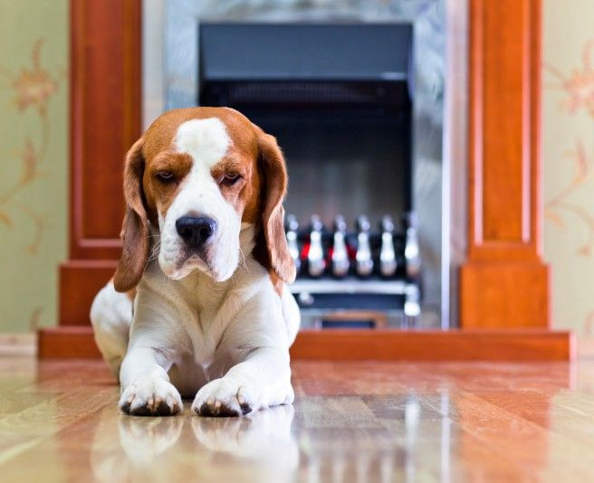 If Your Lease Says No Pets, Should You Still Sneak Yours In