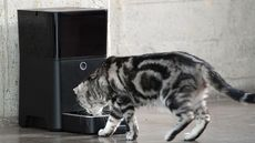 Can a Smart Home Care for Your Pet? You Bet!
