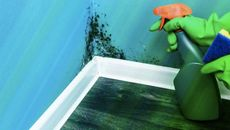 You've Found Mold! Now What? A Guide to Eradicating an Infestation From Your Home