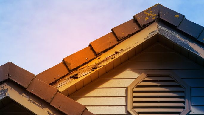 Should You Buy A House With Termite Damage Realtor Com