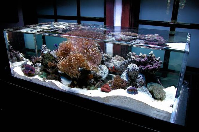 A Saltwater Tank For Endless Enjoyment.