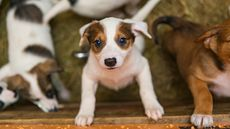 Lonely While Social Distancing? Now Could Be the Best Time To Foster a Pet