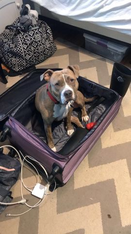 Nala in suitcase