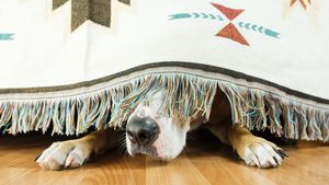 How To Protect Your Pets at Home When Fireworks Are Going Off
