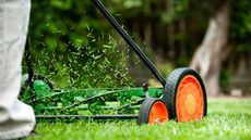 The Lazy Homeowner's Guide to Prepping the Yard for Spring