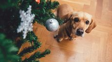 Hosting Pets for the Holidays? Then You'd Better Pet-Proof Your Home. Here's How