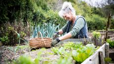 4 Ways To Take Your Gardening Game to the Next Level