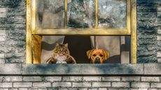 Let the Fur Fly: What Are the Best Cities for Dog Lovers and for Cat Lovers?
