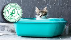 5 Disgusting Ways Your Cat's Litter Box Could Make You Sick—or Worse
