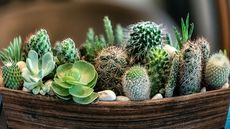 Sayonara, Succulents? 5 Plants That Make Your Home Look Woefully Dated