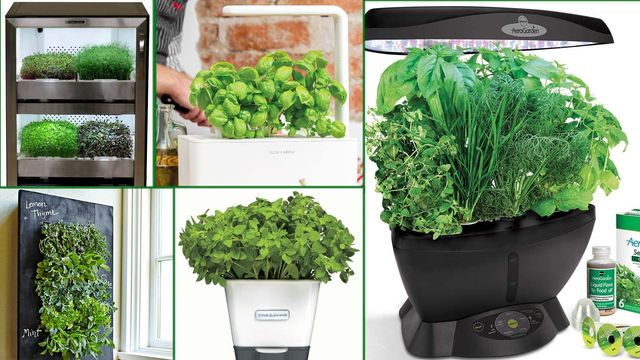 Best Indoor Herb Growing Kits Even Die-Hard Plant Killers Can't Mess Up