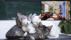 Must Love Cats! New Orleans' Crescent City Cat Club Is Worth Meowing About