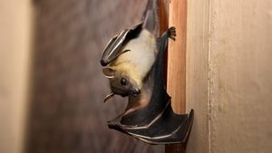 How To Get Rid of Bats in Your Home Without Going Batty Yourself